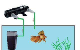 Погружной стерилизатор для аквариума: как работает и зачем нужен?