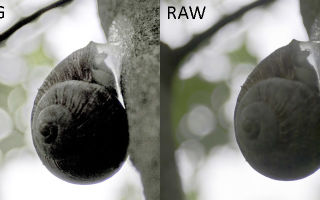 Что такое raw в фотоаппарате: отличия от jpeg, как в нем фотографировать, чем открыть